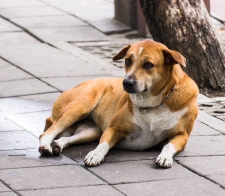 A dog on the street somewhere in Bangkok, Thailand photo
