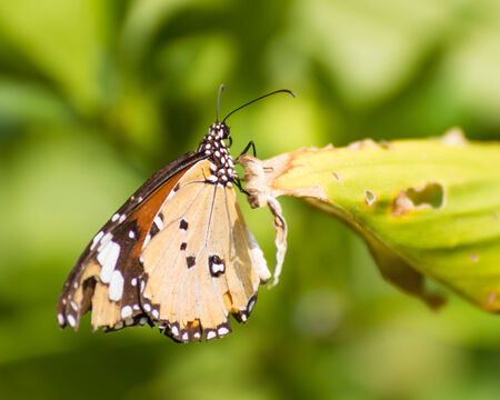 Butterfly on leaf . plants for butterfly in garden.Nature