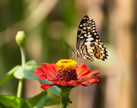 Butterfly on beautiful orange flower. plants for butterfly in garden.Nature Stock Photo