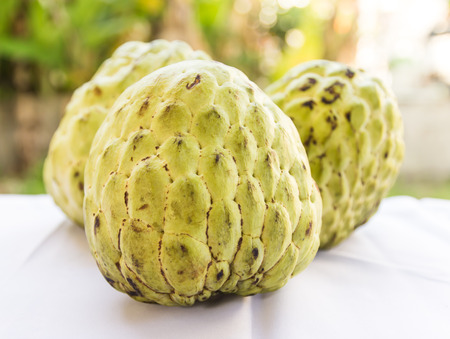 reticulata: Custard apple, is a common name for a fruit, and the tree which bears it, Annona reticulata Stock Photo