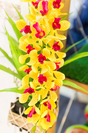 Yellow Orchidaceae flower Stock Photo