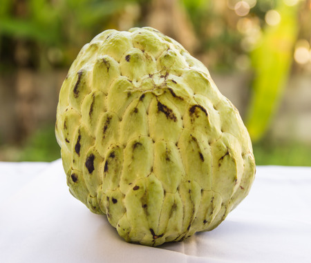 Custard apple, is a common name for a fruit, and the tree which bears it, Annona reticulata Stock Photo