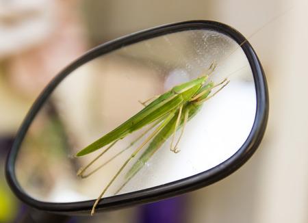 Grasshopper (Omocestus viridulus) on front wing mirror