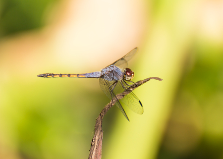 Dragonfly on nature background