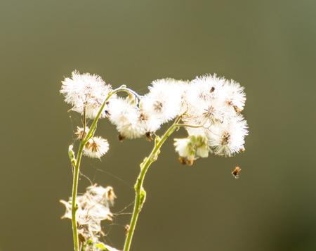 White Grass flower on nature background
