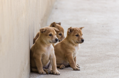 3 puppies looking something Stock Photo
