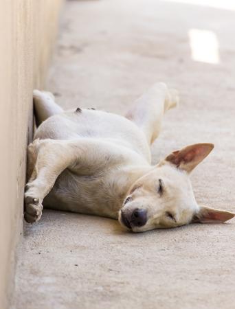 Thai dog sleeping upside down on background