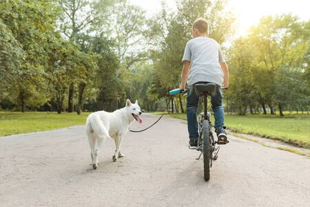 Boy with a white husky dog on bicycle in the park. View from the back.