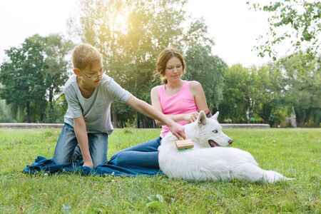 Children is combing her dog with a special brush. Taking care of an animal