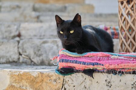 Beautiful adult black male cat lying on a colored rug, outdoor