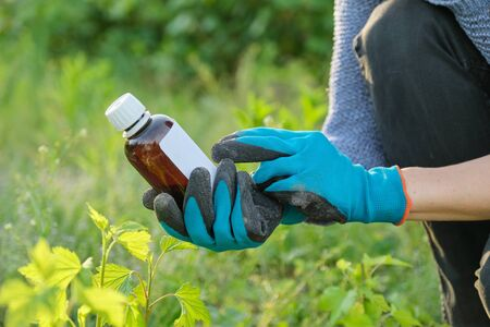 Spring work in the garden, bottle of chemical fertilizer, fungicide in hand of woman gardener Stock Photo