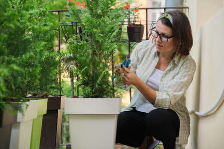 Woman with secateurs caring for an evergreen young bush of thuja plant in pot on home outdoor balcony. Hobbies and leisure, gardening