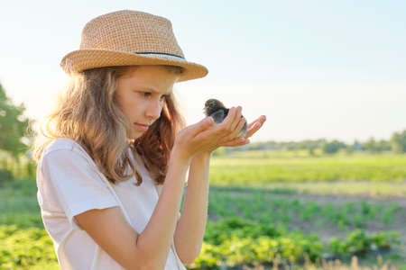 Portrait of child girl holding newborn chicks in hands, spring sunny day in garden, farm, village, copy space Banque d'images