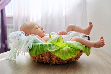 Newborn baby boy in basket, baby in diaper, in cabbage leaves, home interior
