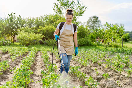 Woman gardener with pressure sprayer backpack spraying young potato plants in spring vegetable garden, protecting from bacterial diseases, pest parasites, chemical and biological preparations