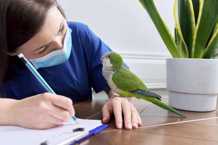 Doctor woman veterinarian examining a green parrot