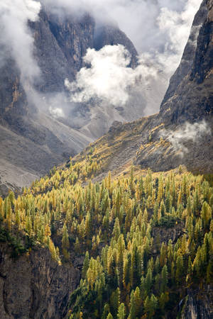 sella: Beautiful autumn landscape with yellow European Larch. In background is seen the peak of the Dolomites Sella part.