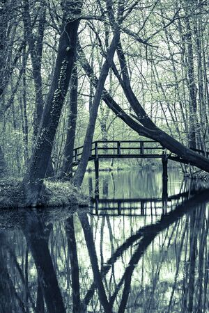 alder tree: The Famous Spreewald Biosphere Reserve, Brandenburg, Germany.