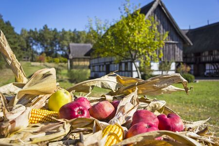 fall trees: Rural scene in the village in autumn with a still life with apples and corncob