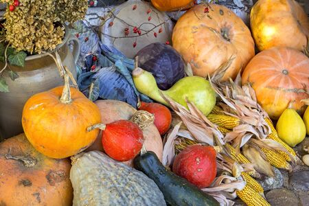 red cabbage: Beautiful autumnal still life with different pumpkins, red cabbage and corncobs.