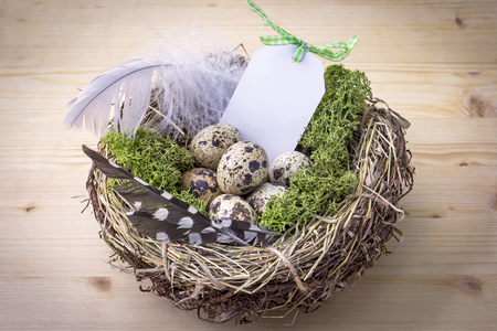 A bird nest on a table with eggs and feather, a small shield can be labeled.