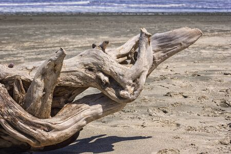 Drift Wood at the Beach of the Pacific Ocean, New Zealand. Stock Photo