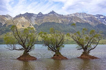 Willow trees in the Lake Wakatipu, near Glenorchy and Queenstown, New Zealand. Glenorchy, at the head of Lake Wakatipu, is the gateway to some of New Zealands best-known, multi-day tracks.