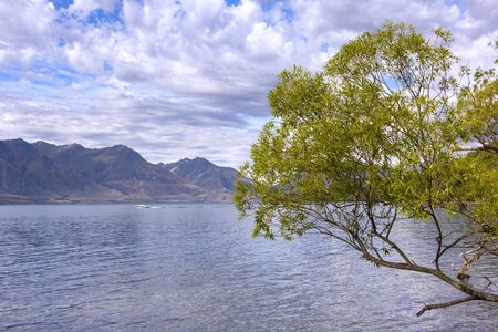 Willow tree at the Lake Wakatipu, near Glenorchy and Queenstown, New Zealand. Glenorchy, at the head of Lake Wakatipu, is the gateway to some of New Zealands best-known, multi-day tracks.