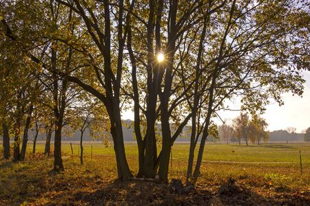 Rural Landscape with trees and meadows, autumnal scene. Was seen in Brandenburg.