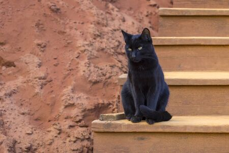 A black cat sits quietly on the steps in the ochre cliffs of Roussillon, France. Stock Photo