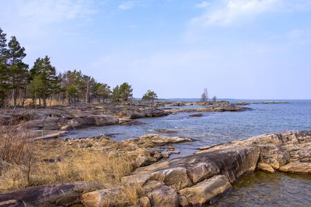 Typical for the Swedish archipelago coast are the stones cut by glaciers and the small pines and other shrubs. Stock Photo