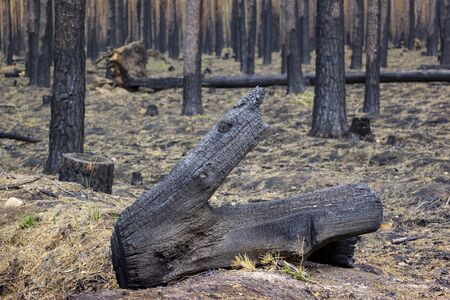 In the state of Brandenburg, Germany, there are more and more forest fires in the pine forests. The forests are dry and in monocultures a devastating fire breaks out more quickly. The fire is on former military training areas. There is a lot of old ammunition in the ground. The area is loaded with ammunition.
