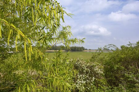 Spring in Havelland, Brandenburg. View of the fresh green and flooded meadows. Idyllic scene in the nature. Standard-Bild