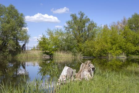 Spring in Havelland, Brandenburg. View of a wet meadow with many different plants and herbs.