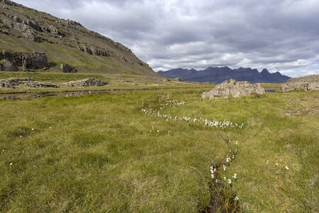 View of a typical and beautiful landscape and untouched nature in East Iceland. In the foreground you can see a small creek with cotton grass. Standard-Bild