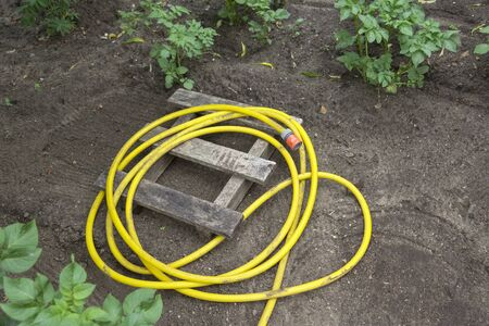 View of a yellow garden hose. It lies rolled up on the ground. Seen in an allotment garden with planted potatoes. Standard-Bild