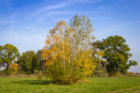 Autumnally colored leaves and trees on a meadow. Lakes in Brandenburg.