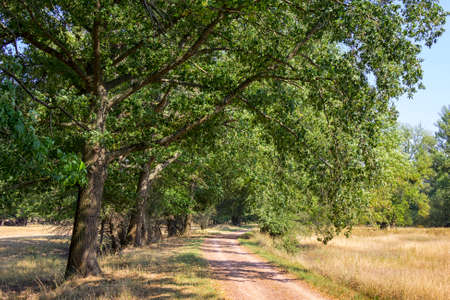 On the Elbe cycle path near Dessau, Saxony-Anhalt. The path leads under large oaks, through a park-like landscape. Standard-Bild - 154315528