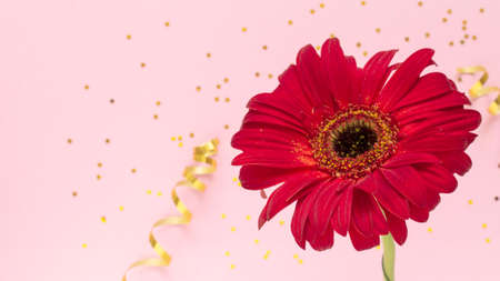 Beautiful red gerbera flower on pink background. Happy Mother's Day, Women's Day, Valentine's Day or Birthday greeting card. celebration greeting concept, flat lay and copy space