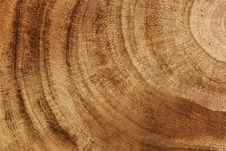 Wooden detailed texture of cut tree trunk or stump, closeup. Rough organic tree rings. Wood texture background. Tree trunk cross-section. Top view, macro, close up