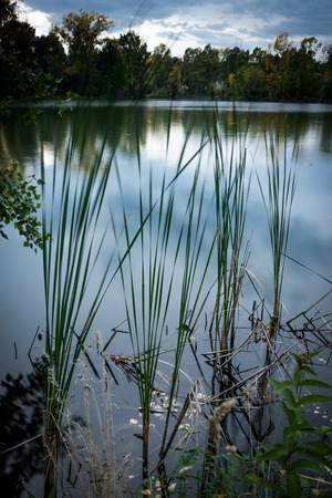 Peaceful lake water surface with plants and reflection.