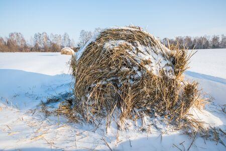 snowy field: Hay stack in the snowy field winter