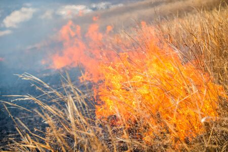 cinders: Wild grass on fire close up photo