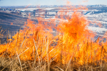 wild grass: Wild grass on fire close up photo