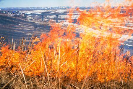 llamas de fuego: la hierba salvaje en el fuego cerca foto
