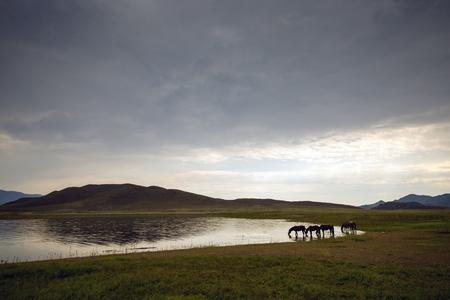 caballo bebe: monta�a de verano y cielo azul paisaje con caballos de pastoreo Foto de archivo