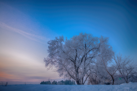 snowy trees on field at sunset Stock Photo