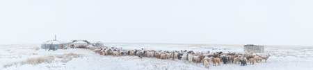 herd of herbivorous animals in snowy prairie Stock fotó - 84262183