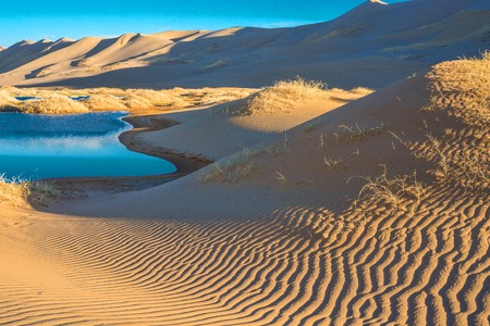 landscape of desert with little oasis Stock Photo