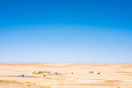 camels near oasis in sunlit desert Stock Photo